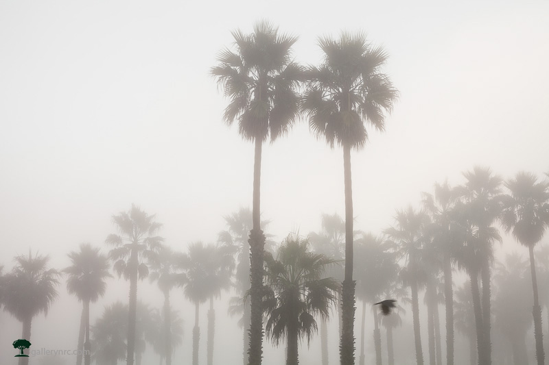 Family of Palms by Morgan Hagar