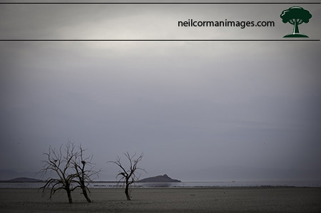 Salton Sea - Trees